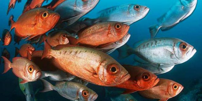 Animais Vertebrados: Peixes