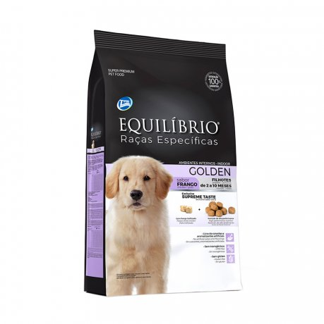 Equilíbrio Golden Retriever